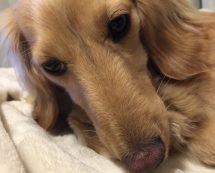 鼻が長いハナコ