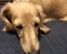 眠いハナコ